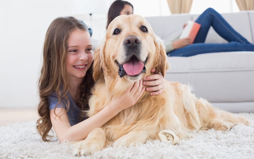 9 Cleaning Tips for Pet Owners